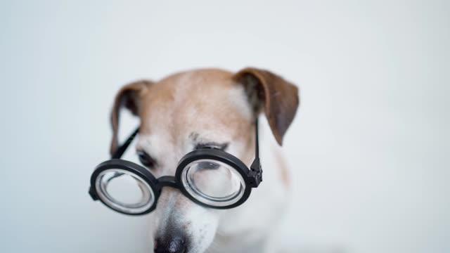 Adorable pet muzzle close up. Video footage - video