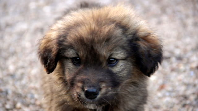 Encantadores cachorro temblar en frío de alta definición - vídeo