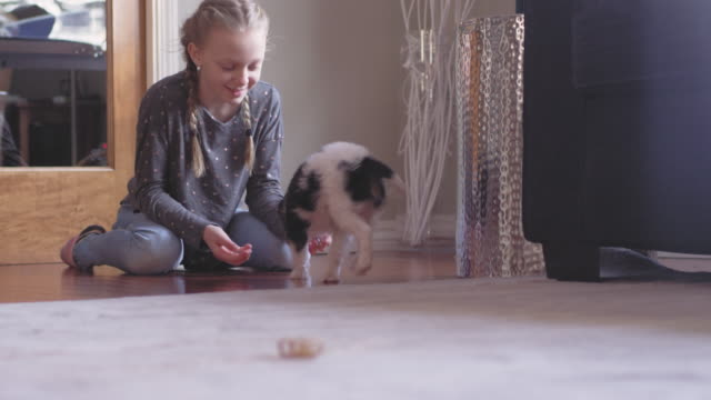 Adorable puppy stops eating his treat, and runs up to her young owner. video