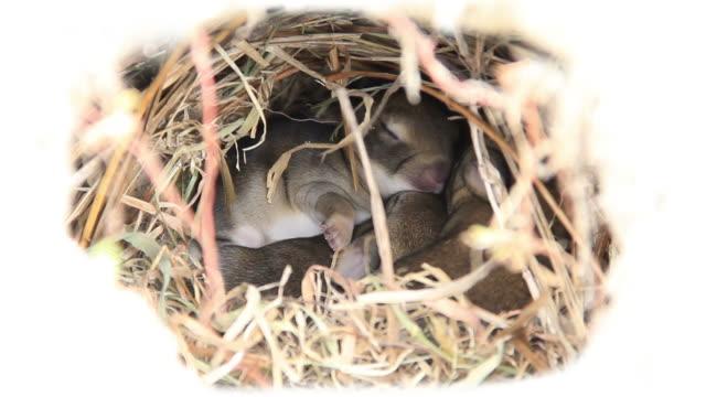adorable wild baby bunnies cuddling in a rabbit hole. close-up. - tavşan hayvan stok videoları ve detay görüntü çekimi