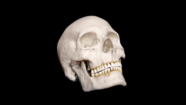 Adult Human Skull Rotating Loop Adult human skull turning slowly on black background - Looped for endless playback skull stock videos & royalty-free footage