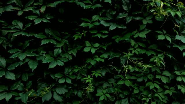 Adult Man Hiding Behind a Bush