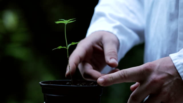 Adult Man in Lab Coat Taking Care of Cannabis Seedling