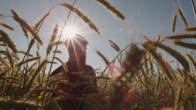 Erwachsene stehen im schönen Weizenfeld mit blauen Himmel und epische Sonnenlicht - Schuss auf rot – Video