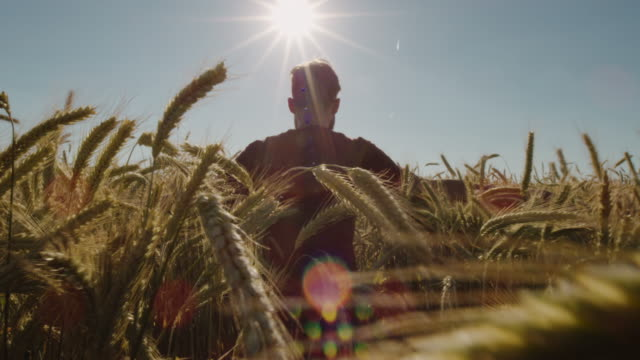 Erwachsenen zu Fuß durch schöne Weizenfeld mit blauen Himmel und epische Sonnenlicht - geschossen auf rot – Video