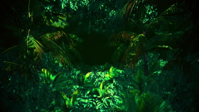 adventure in jungle summer - exotic stock videos & royalty-free footage