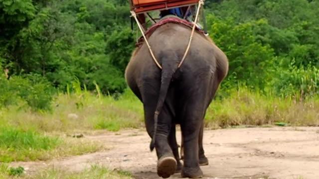 タイで象トレッキングの冒険 - 動物に乗る点の映像素材/bロール