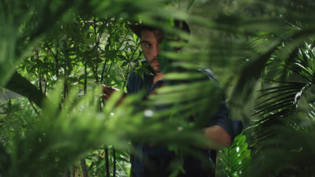 Adventurer in Hat Walking through Jungle Forest video