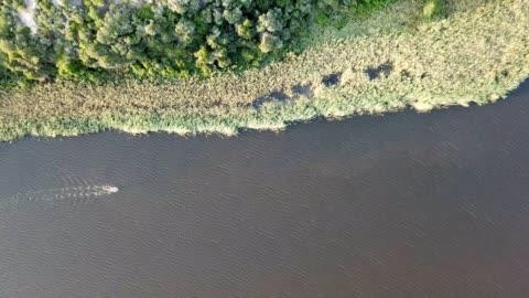 vidéos et rushes de couple aventureux pagayer sur le lac - insouciance