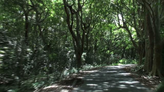 avventura percorrere impressionante viale di alberi calvaria - viale video stock e b–roll