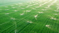 istock Aeriai view of agricultural irrigation systems in grass field. 1276270213