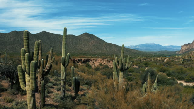 Aerial 4k Drone View of Sonoran Desert with Saguaro Cacti and Mountains in Arizona on a bright sunny day showing Usery Mountain Regional Park and Lost Dutchman State Park