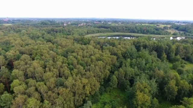 vídeos de stock, filmes e b-roll de antena acima floresta num dia de verão na polónia. - nordeste