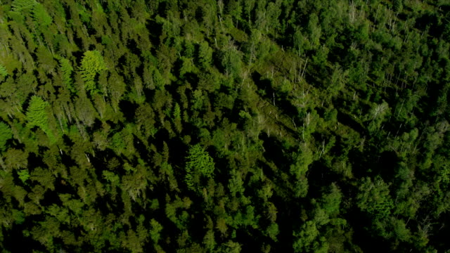 Aerial above view North Delta peat bog, Vancouver Aerial above view North Delta Nature Reserve peat bog or Burns Bog nr South Arm of the Fraser River, nr Annacis Highway, Vancouver, Canada fraser river stock videos & royalty-free footage