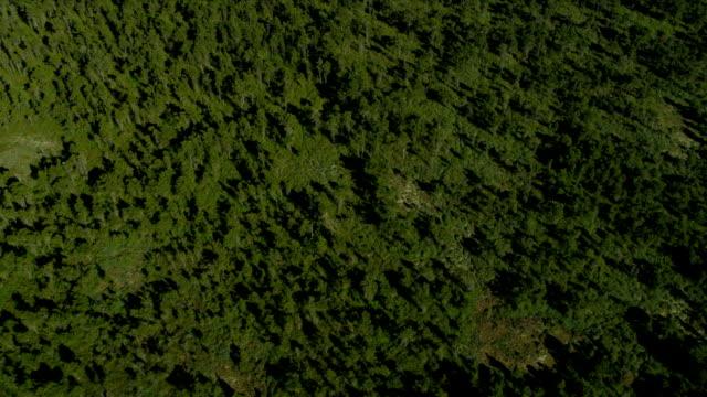 veduta aerea sopra vista nord delta torbiera, vancouver - fiume fraser video stock e b–roll