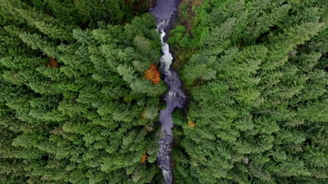 Aerial Above Waterfalls and River Rapids Deep Forested Landscape