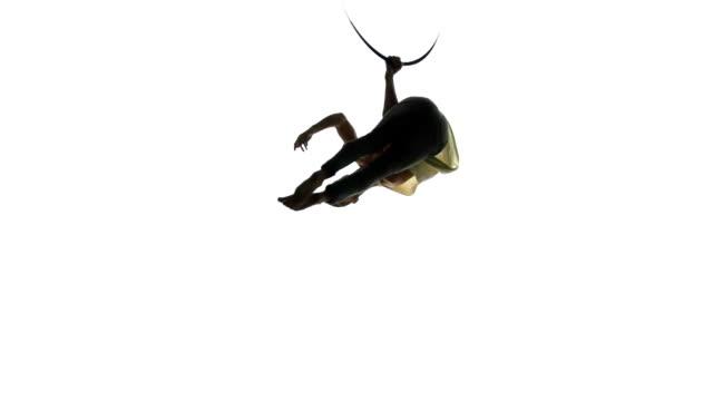 vidéos et rushes de acrobate aérien homme sur scène de cirque. silhouette fond blanc. - homme slip