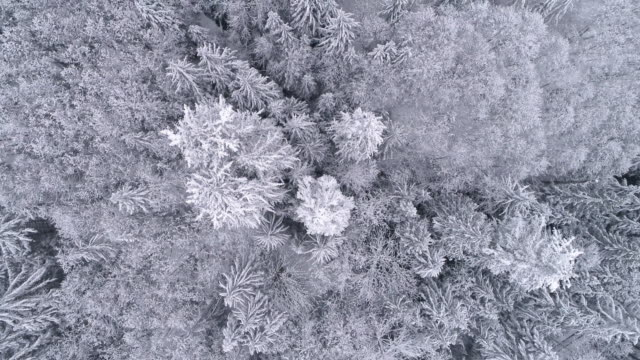 Aerial Background High Above Winter Snow Covered Trees in Cold Mountain Forest video