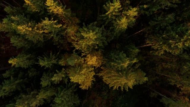 antenn: bayersk skog i höst - videor med salzburg bildbanksvideor och videomaterial från bakom kulisserna