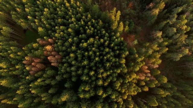 vídeos de stock, filmes e b-roll de antena: floresta bávara no outono - áustria