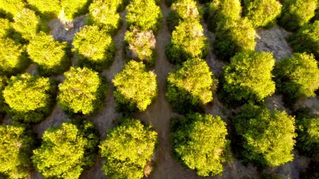 Aerial California Orange Orchards video