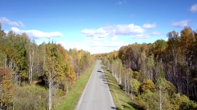 vídeos de stock, filmes e b-roll de movimentações aéreas do carro na estrada na floresta do vidoeiro que desaparece afastado - veículo terrestre