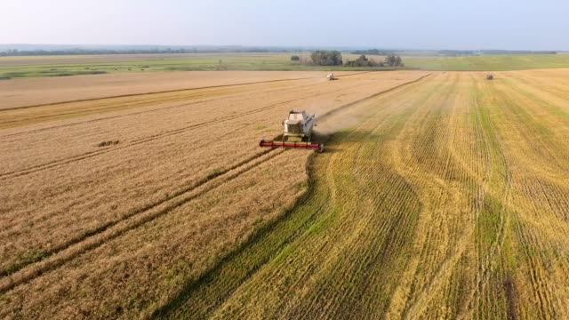 aerial combine Harvester gathers the wheat Aerial view Combine Harvester gathers the wheat. Harvesting grain field, crop season. agriculture wheat stock videos & royalty-free footage