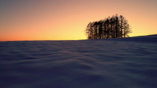 空中 - 夜明けの雪原と遠くにある木々 - 冬点の映像素材/bロール