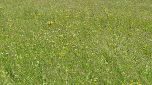 aerial drone close up shot of green grass in a field - styria filmów i materiałów b-roll