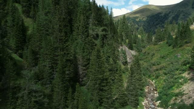夏の空中ドローン飛行は、ノックベルゲ山脈の渓流を越えて ビデオ