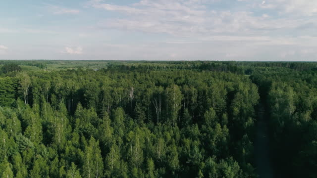 Aerial drone footage. Fly over forest with lake