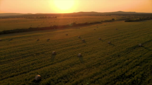 aerial drone footage in a sunset light over the meadow with bales - ранчо стоковые видео и кадры b-roll