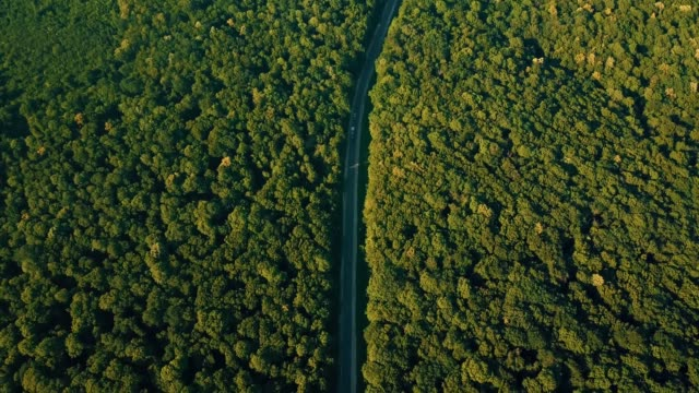 Aerial drone footage of beautiful road in middle of forest during sunset, colorful landscape.