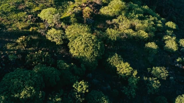 aerial drone footage of beautiful stunning landscape with arid desert vegetation plants bushes on a sunny day - cespuglio tropicale video stock e b–roll