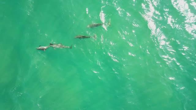 wáter、アカプルコ、メキシコの表面近くのイルカの空中ドローン映像。 - 野生動物旅行点の映像素材/bロール
