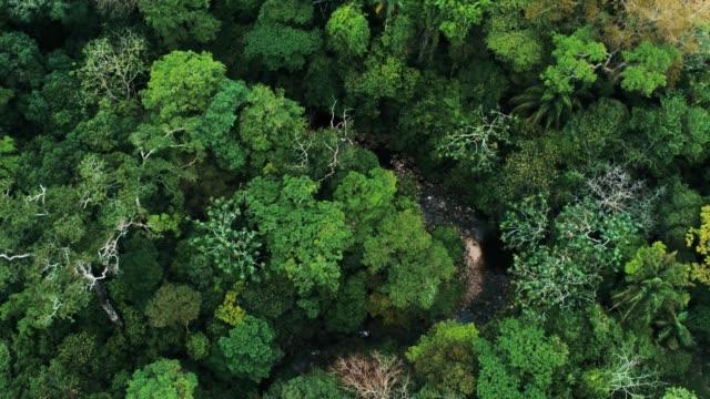 vidéos et rushes de images de drones aériens de la forêt tropicale et une petite rivière au parc national amboró, bolivie - forêt tropicale humide