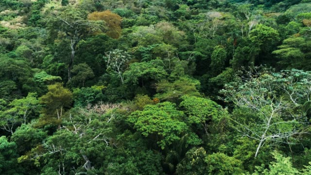 Aerial drone footage of the rainforest at Amboro National Park, Bolivia
