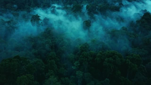 aerial drone footage of the rainforest at sabah, borneo, malaysia - trees in mist stock videos & royalty-free footage