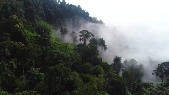 Aerial drone footage of the rainforest in morning with a lot of fog and mist