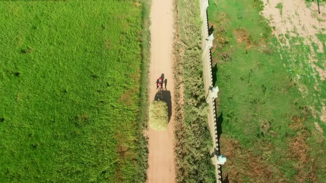 aerial drone overhead of two-wheel tractor carrying heavy load of rice straw through rice fields - cocchio video stock e b–roll