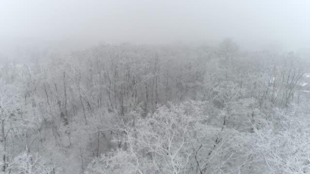 4k antenn drönare synvinkel snö faller över idylliska vita trädtopparna i skogen, realtid - snöstorm bildbanksvideor och videomaterial från bakom kulisserna