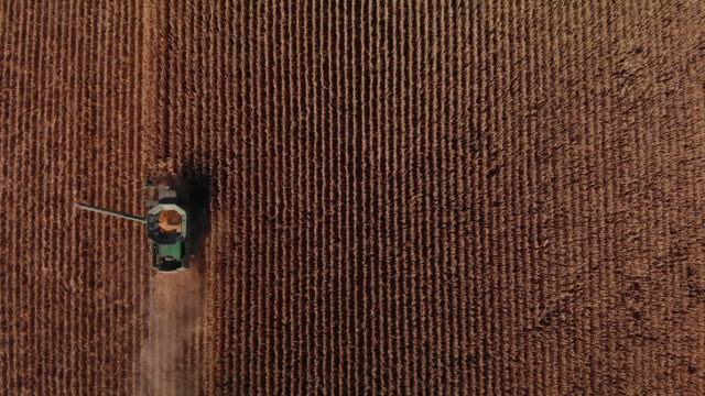 aerial drone shot directly overhead of a combine harvester with an auger and a grain tank driving through a field of corn at harvest (wide shot) - sustainability video stock e b–roll