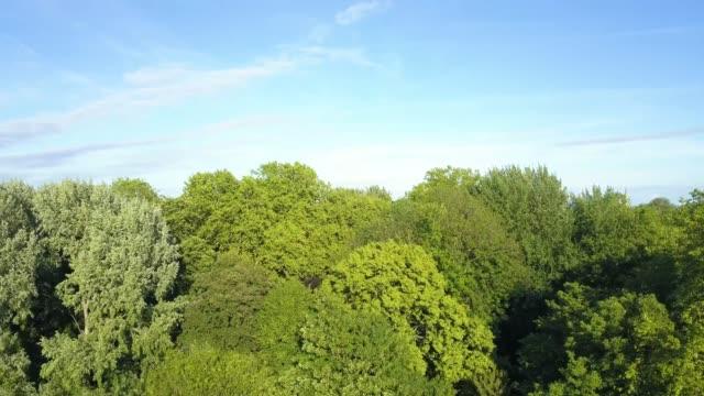 vídeos y material grabado en eventos de stock de disparo aéreo de drones, la ciudad de lille a partir de los árboles del parque de la ciudadela. 4k - árbol