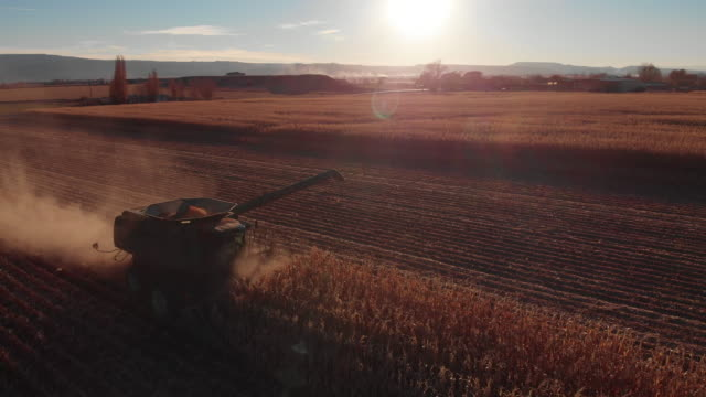 aerial drone shot of a combine harvester with an auger driving through a field of corn at harvest at sunset - agricultural machinery stock videos & royalty-free footage