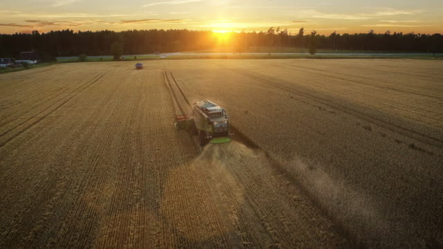 Aerial drone shot of a combine harvester working in a field at sunset. video