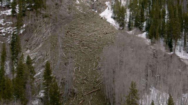vídeos y material grabado en eventos de stock de drone aéreo disparo de un campo de escombros de avalancha con troncos de árboles caídos en el lado de una montaña en el oeste de colorado - nieve amontonada