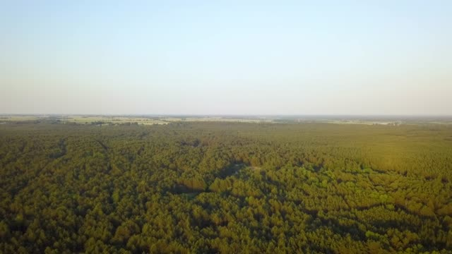 aerial drone shot of pine forest - wood texture filmów i materiałów b-roll