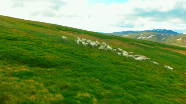 Vue aérienne de bourdonnement de renne - Vidéo