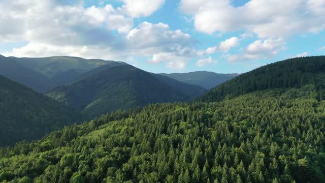 luft, drohnenaufnahme von fichten, fliegen über einen nadelwald, niedere tatra, slowakei - kieferngewächse stock-videos und b-roll-filmmaterial