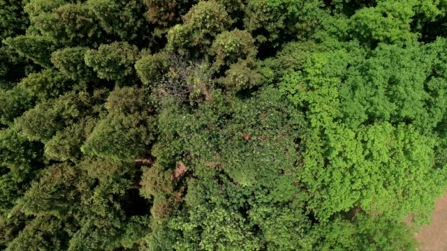 Aerial drone shot over the forest. video